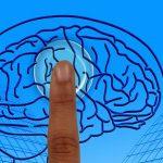 Todo sobre el cerebro