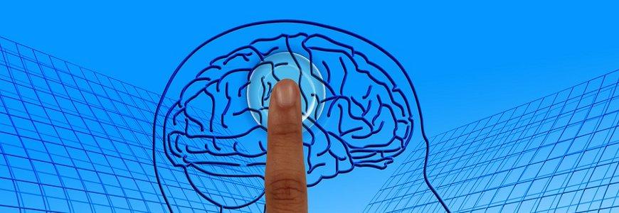 cerebro - Todo sobre el cerebro