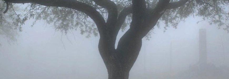 arbol - El árbol de los problemas