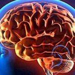 El cerebro se puede entrenar para la alegría o para la felicidad