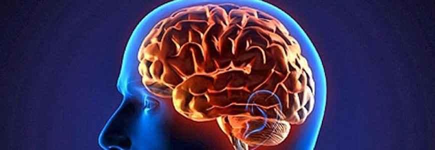 cerebro - El cerebro se puede entrenar para la alegría o para la felicidad
