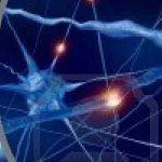 Estimula tu cerebro para vivir más y mejor : EMT