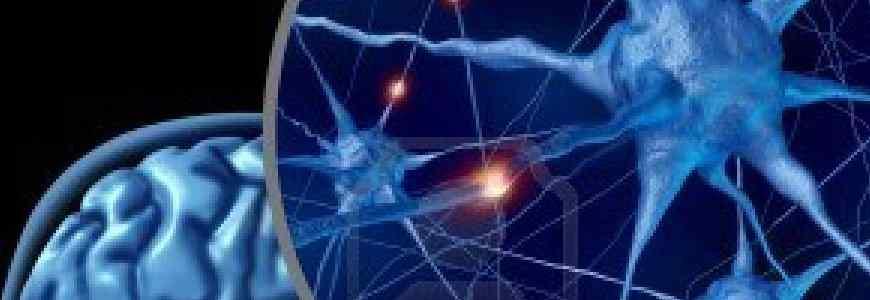emt cerebro - Estimula tu cerebro para vivir más y mejor : EMT